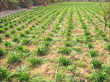 Crop Insurance Scheme